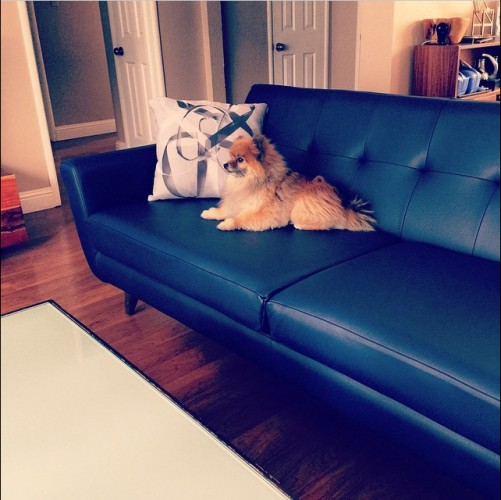 shop the look hughes leather sofa photo by jerry s