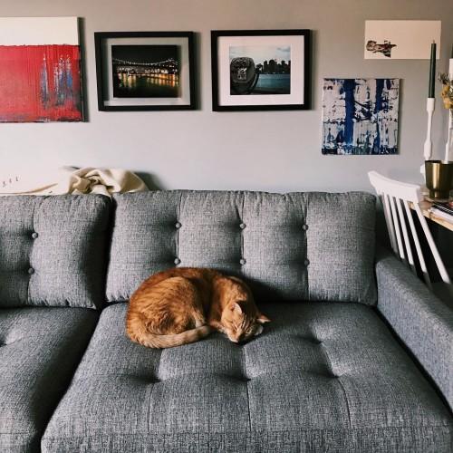 Superb Shop The Look Eliot Sleeper Sofa   Photo By Jennifer L B.