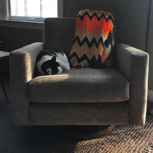 Korver Swivel Chair - Photo by Thatch Cats