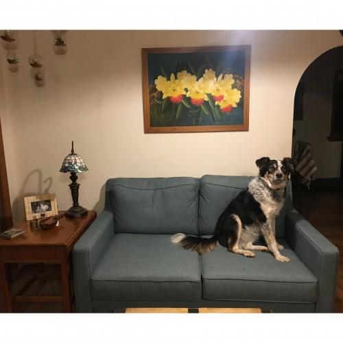 Customer Pet Photos Joybird