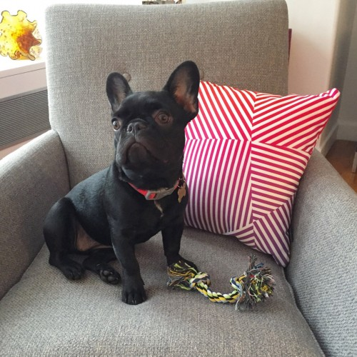 Burns Chair - Photo by 5thavefrenchie