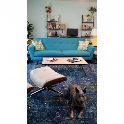 Pet Friendly Furniture & Fabrics   Joybird
