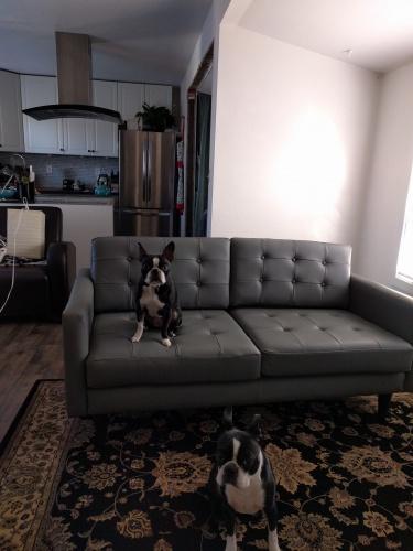Eliot Leather Apartment Sofa by Joybrid