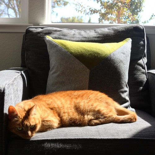 Tucker Pillow - Photo by Alison C.