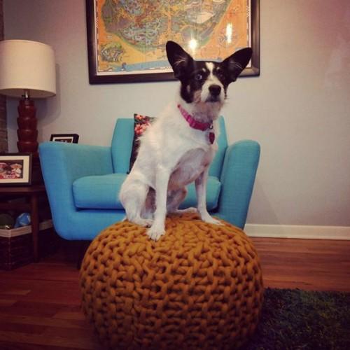 Riley (Mustard Yellow) Pouf - Photo by Rachel Pitzel