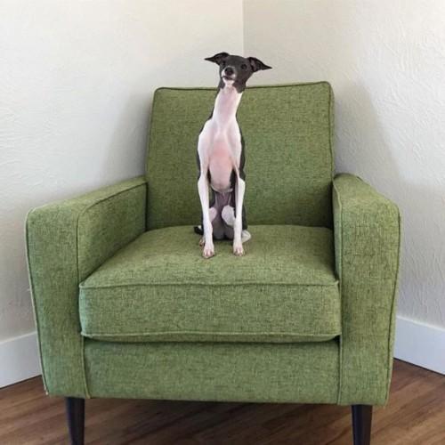 Winslow Chair - Photo by cannoli_iggy