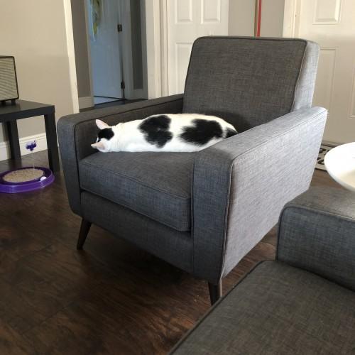 Winslow Chair - Photo by Erika Johanson