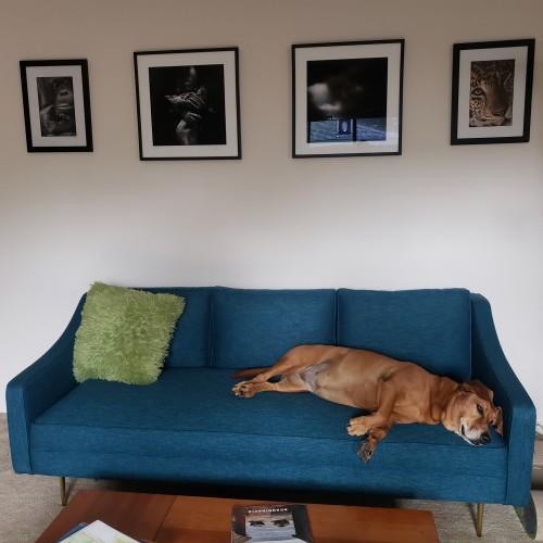 Cora Sofa - Photo by Andrea Smith